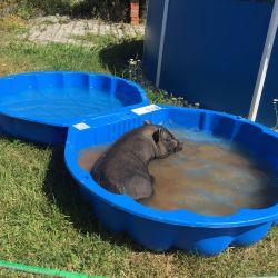 Pepina v bazénku