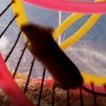 Myška vypuštěna na svobodu